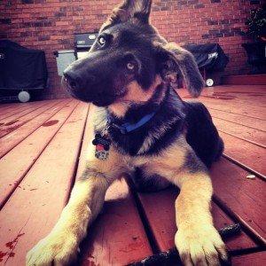instagram dog